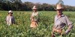 LA AGRICULTURA Y EL PARAGUAY, UNIDOS EN TODA LA HISTORIA